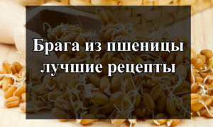 Как обработать брагу из пшеницы во домашних условиях: рецепты и технология