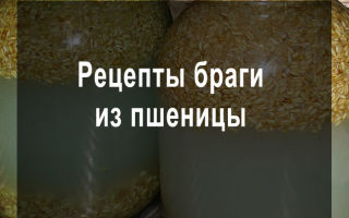 Рецепт браги для самогона из пшеницы