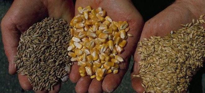 Технология приготовления солода в домашних условиях: рожь, зерно, ячмень