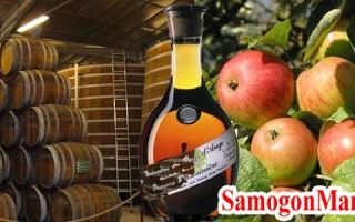 Кальвадос в домашних условиях из яблок