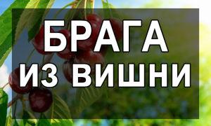 Брага из вишни во домашних условиях- простые рецепты