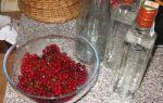 Рецепты приготовления наливки из калины на водке