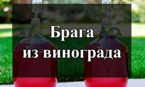Как сварить отличную брагу из винограда во домашних условиях